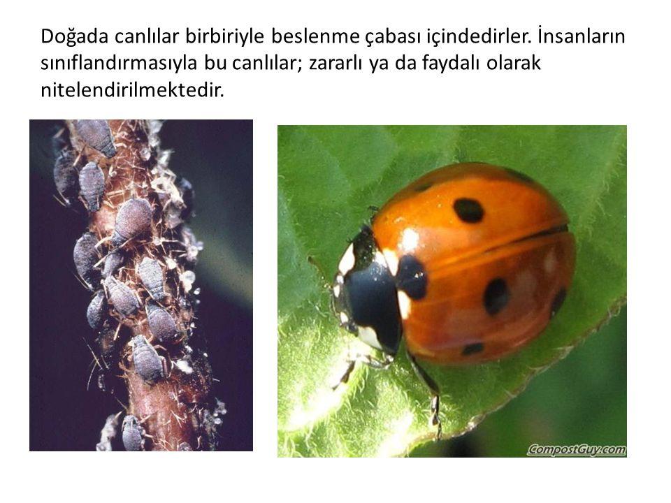 Doğada canlılar birbiriyle beslenme çabası içindedirler