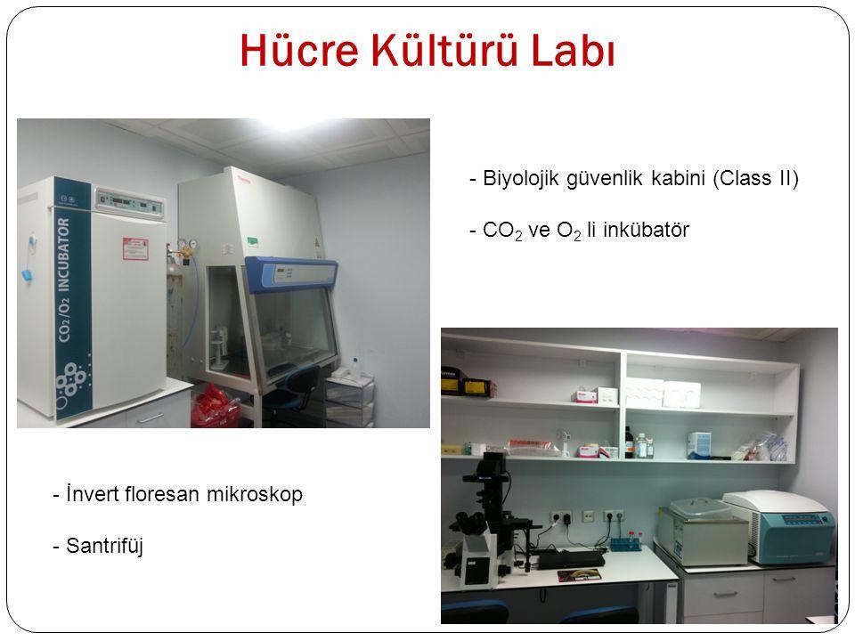 Hücre Kültürü Labı Biyolojik güvenlik kabini (Class II)