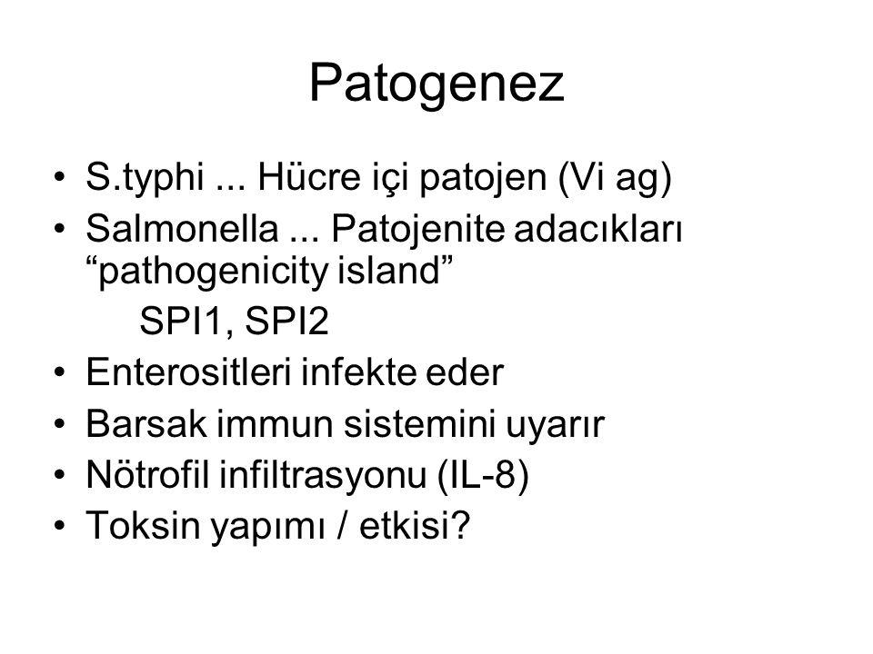 Patogenez S.typhi ... Hücre içi patojen (Vi ag)