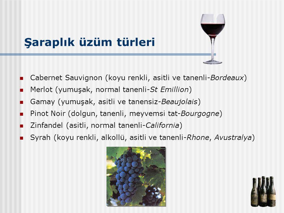 Şaraplık üzüm türleri Cabernet Sauvignon (koyu renkli, asitli ve tanenli-Bordeaux) Merlot (yumuşak, normal tanenli-St Emillion)