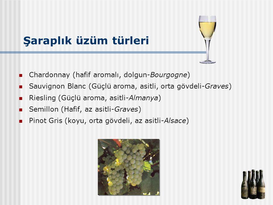 Şaraplık üzüm türleri Chardonnay (hafif aromalı, dolgun-Bourgogne)