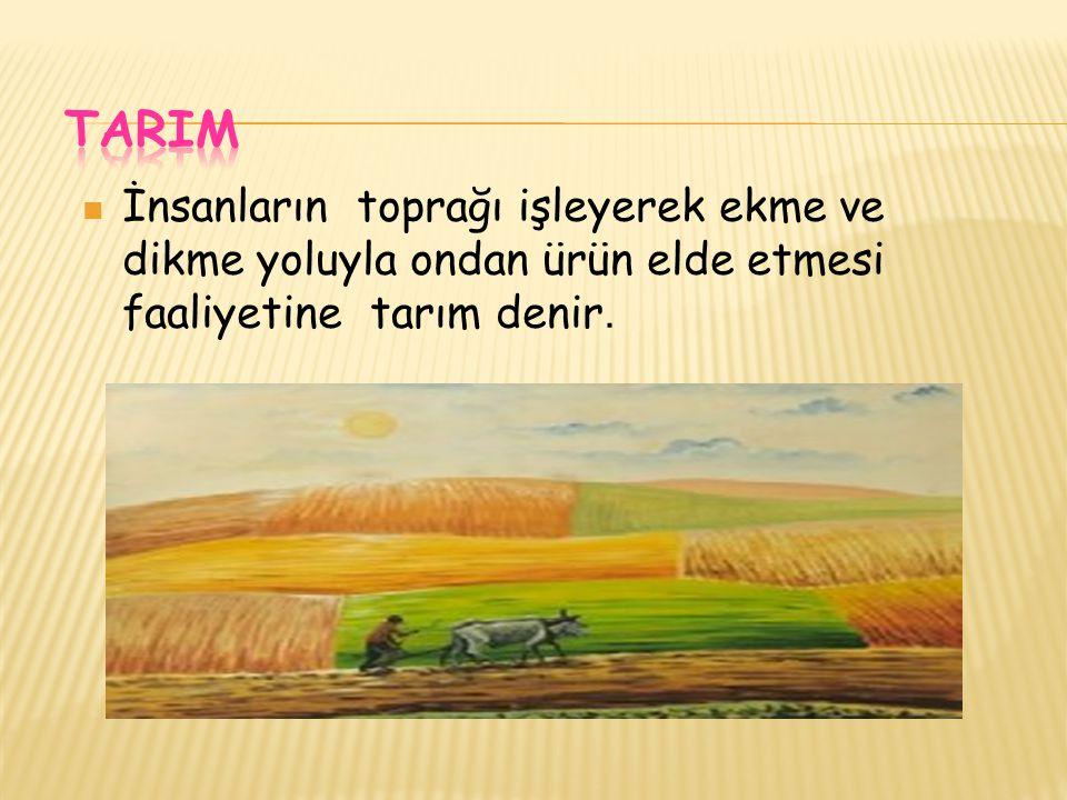 TARIM İnsanların toprağı işleyerek ekme ve dikme yoluyla ondan ürün elde etmesi faaliyetine tarım denir.