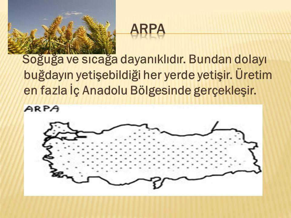 ARPA Soğuğa ve sıcağa dayanıklıdır. Bundan dolayı buğdayın yetişebildiği her yerde yetişir.