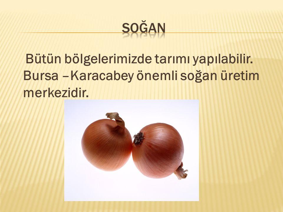 soğan Bütün bölgelerimizde tarımı yapılabilir. Bursa –Karacabey önemli soğan üretim merkezidir.