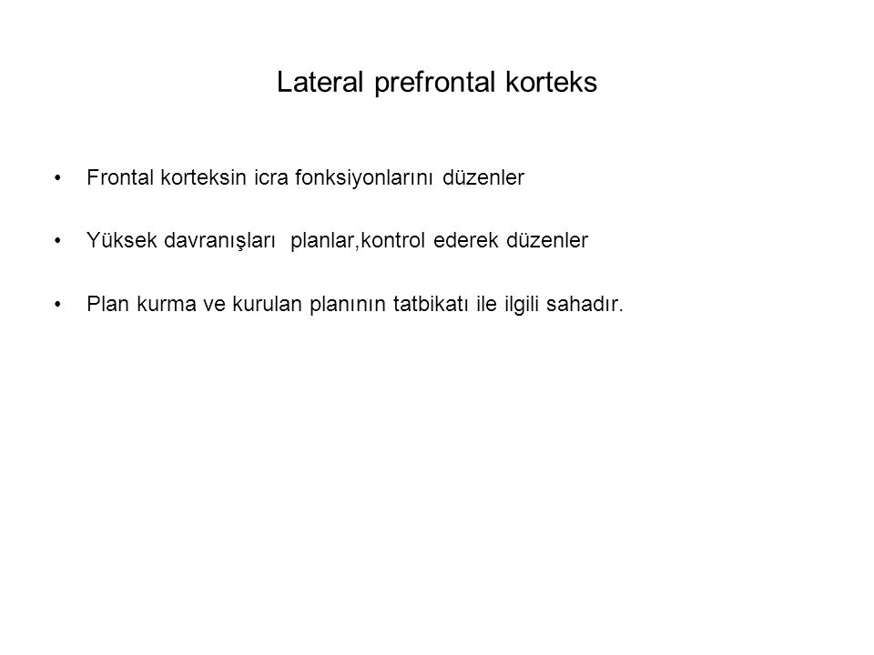 Lateral prefrontal korteks