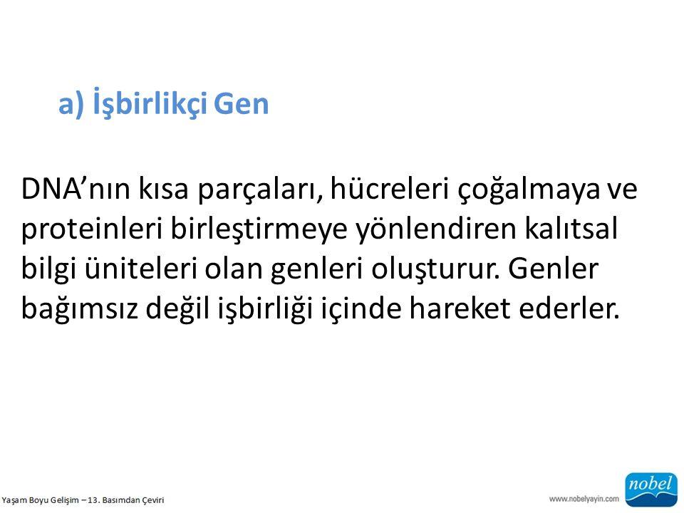 a) İşbirlikçi Gen