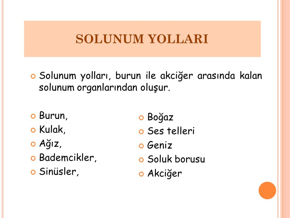 SOLUNUM YOLLARI Solunum yolları, burun ile akciğer arasında kalan solunum organlarından oluşur. Burun,