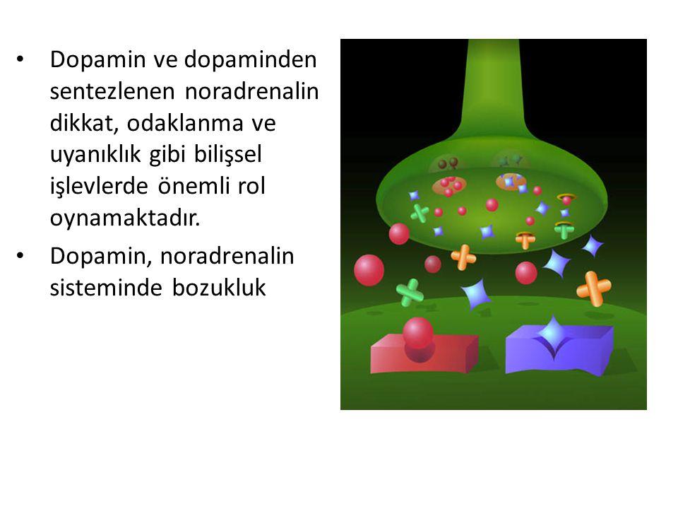 Dopamin ve dopaminden sentezlenen noradrenalin dikkat, odaklanma ve uyanıklık gibi bilişsel işlevlerde önemli rol oynamaktadır.