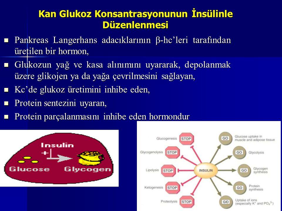 Kan Glukoz Konsantrasyonunun İnsülinle Düzenlenmesi