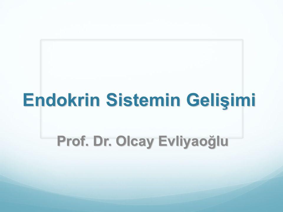 Endokrin Sistemin Gelişimi