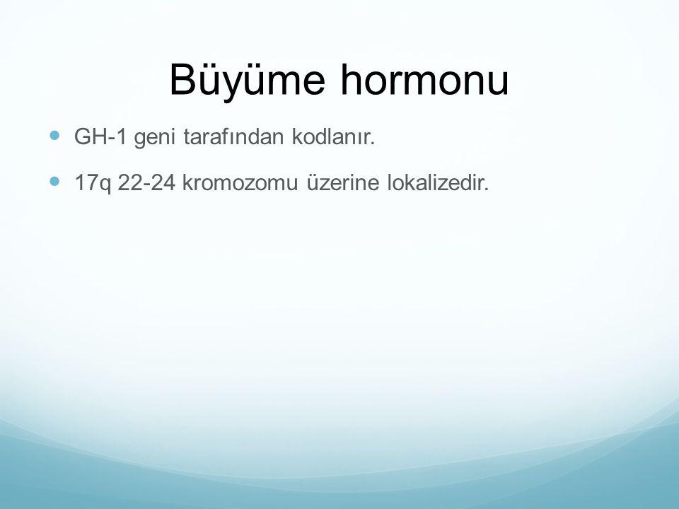 Büyüme hormonu GH-1 geni tarafından kodlanır.
