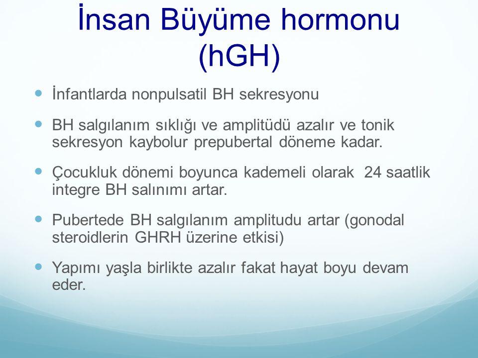 İnsan Büyüme hormonu (hGH)
