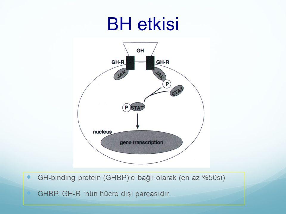 BH etkisi GH-binding protein (GHBP)'e bağlı olarak (en az %50si)
