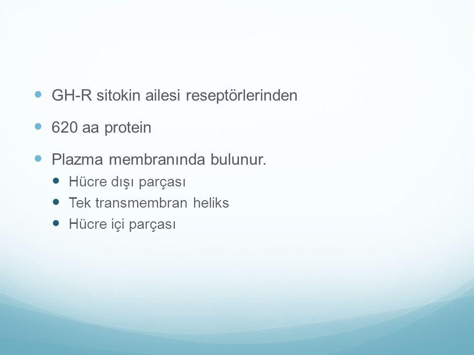GH-R sitokin ailesi reseptörlerinden 620 aa protein
