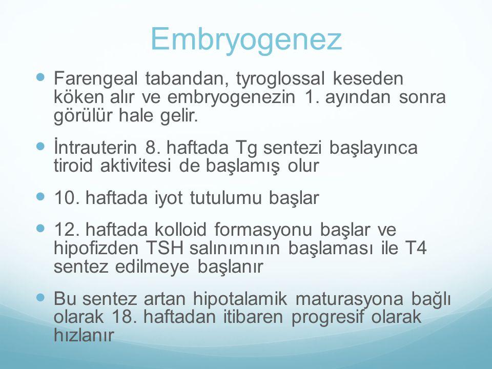 Embryogenez Farengeal tabandan, tyroglossal keseden köken alır ve embryogenezin 1. ayından sonra görülür hale gelir.