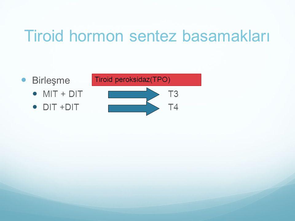 Tiroid hormon sentez basamakları