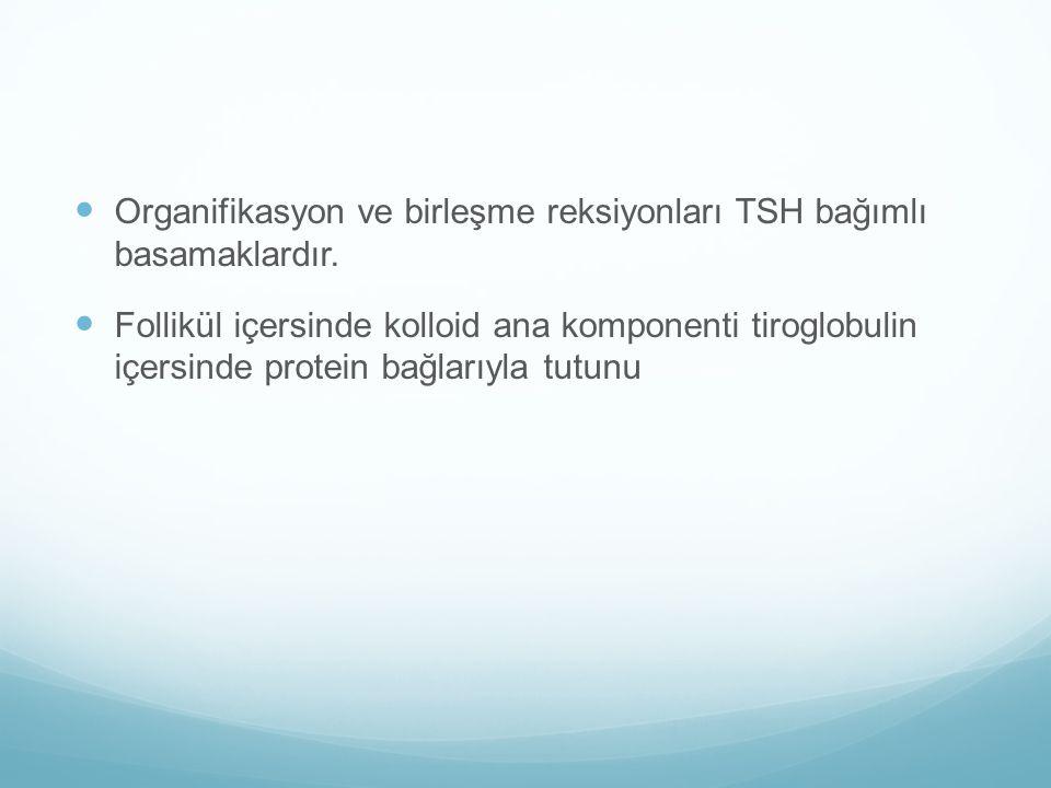 Organifikasyon ve birleşme reksiyonları TSH bağımlı basamaklardır.