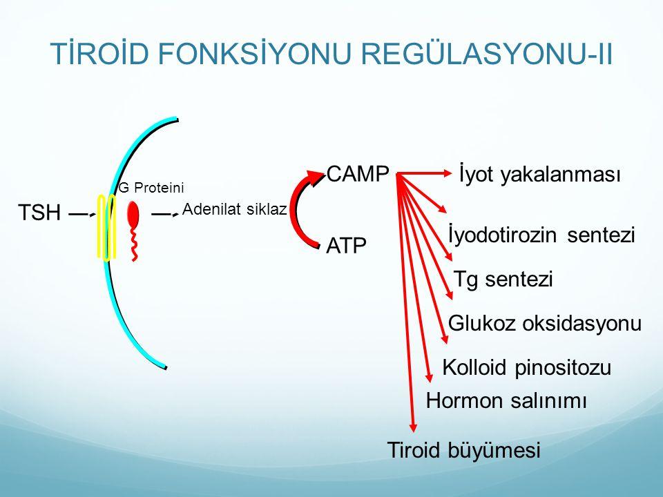 TİROİD FONKSİYONU REGÜLASYONU-II