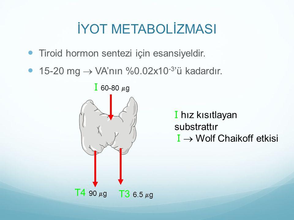 İYOT METABOLİZMASI Tiroid hormon sentezi için esansiyeldir.