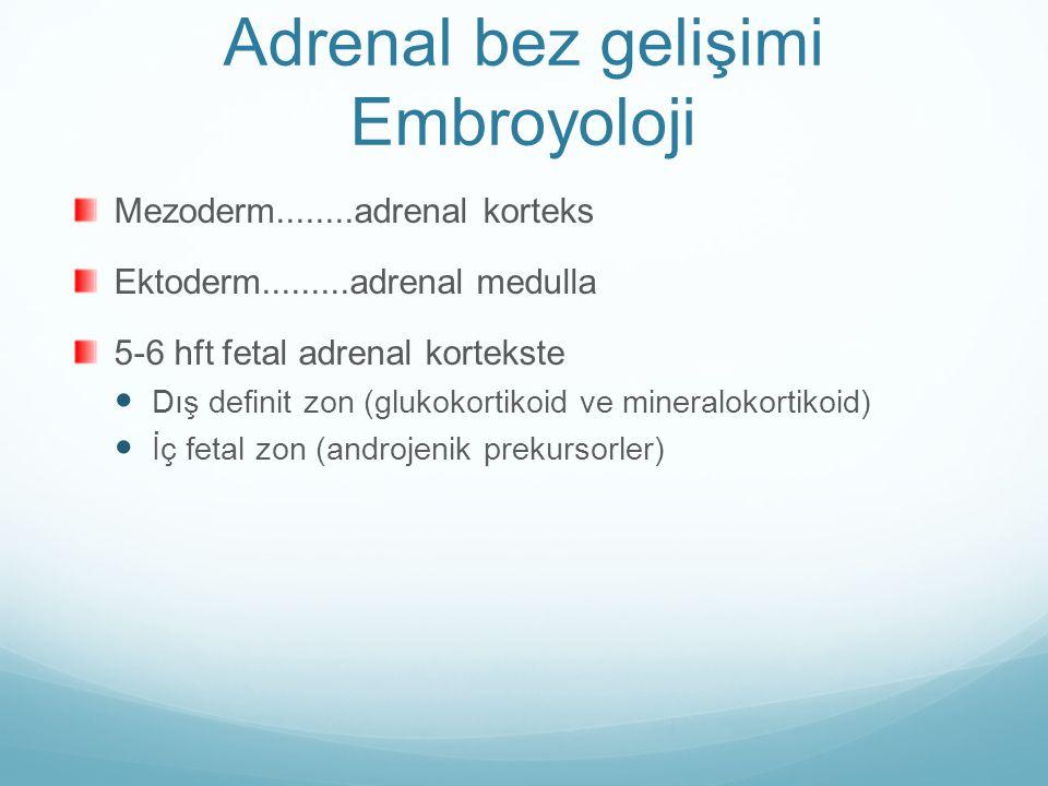 Adrenal bez gelişimi Embroyoloji