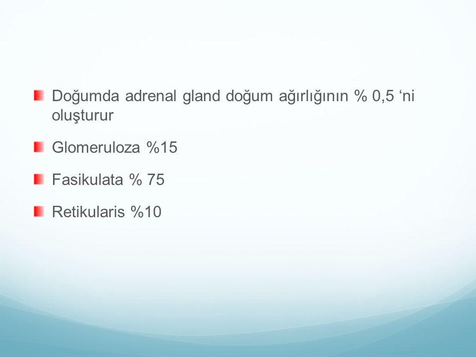 Doğumda adrenal gland doğum ağırlığının % 0,5 'ni oluşturur