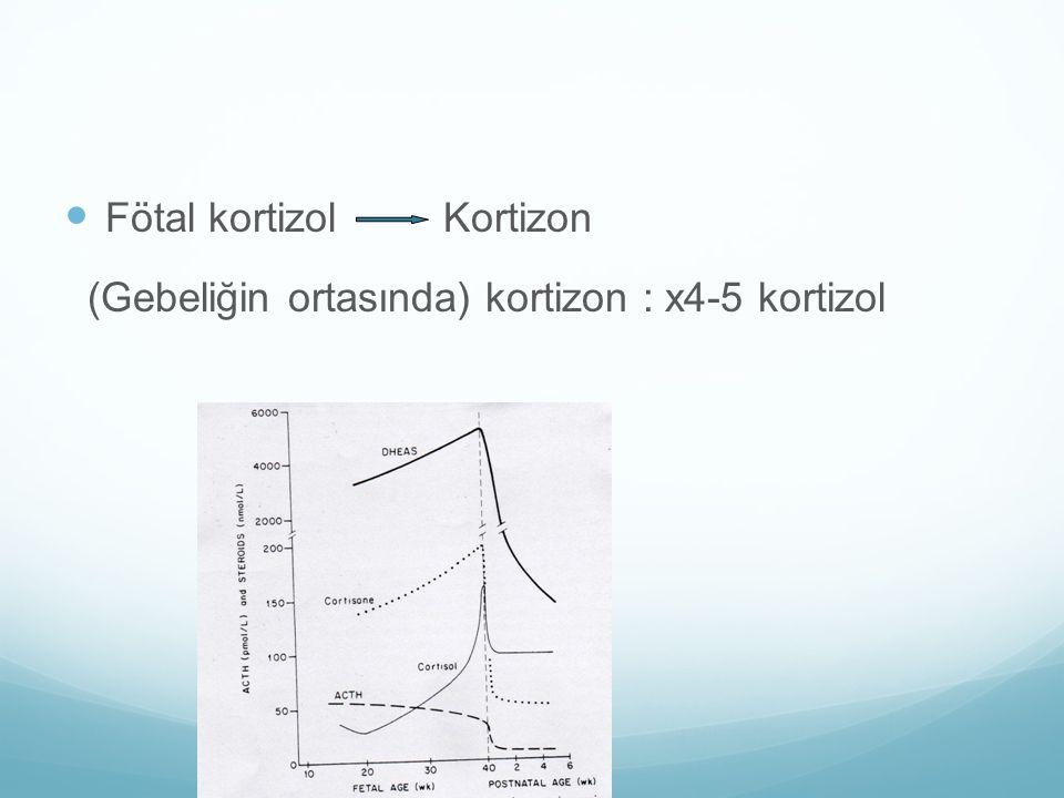 Fötal kortizol Kortizon