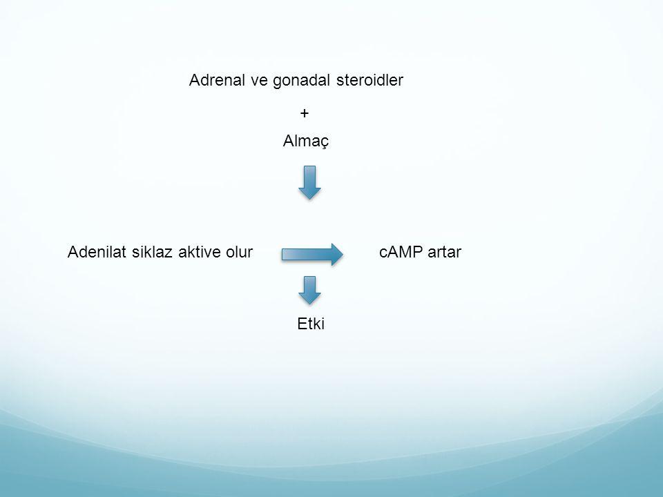 Adrenal ve gonadal steroidler
