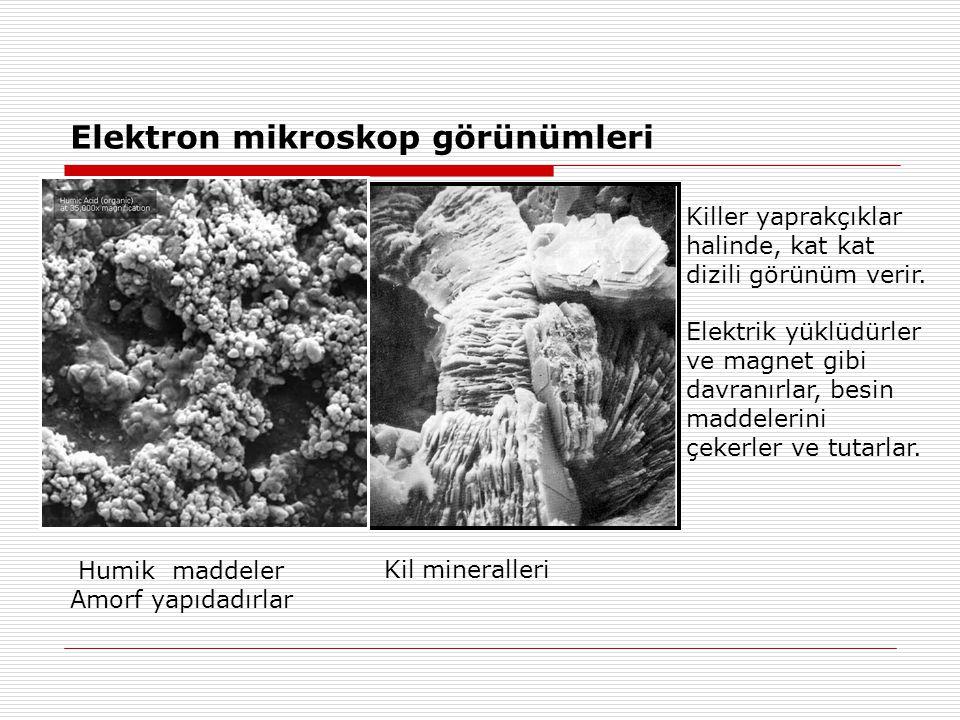Elektron mikroskop görünümleri