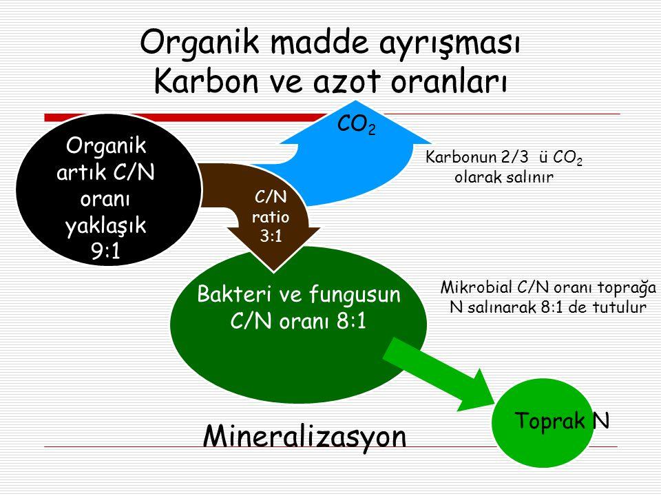 Organik madde ayrışması Karbon ve azot oranları