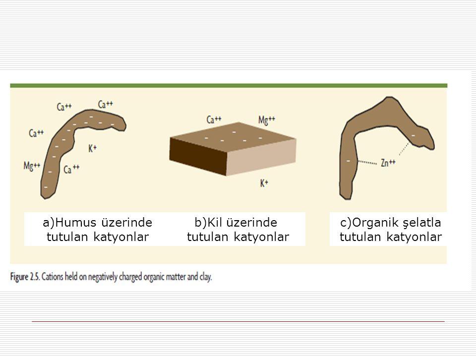 a)Humus üzerinde tutulan katyonlar b)Kil üzerinde tutulan katyonlar
