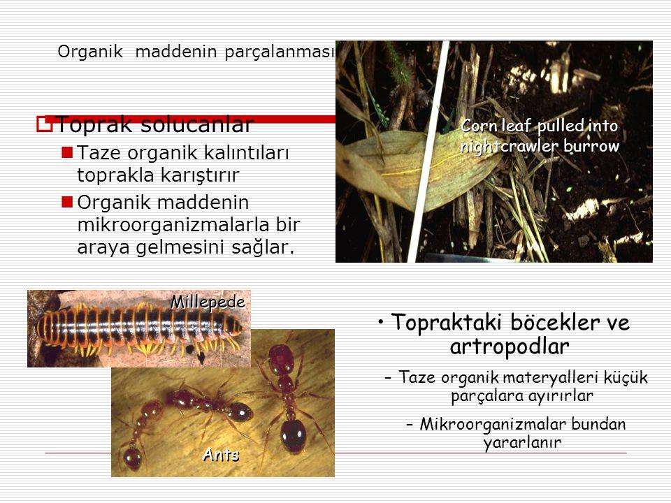 Organik maddenin parçalanması