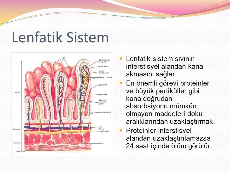 Lenfatik Sistem Lenfatik sistem sıvının interstisyel alandan kana akmasını sağlar.