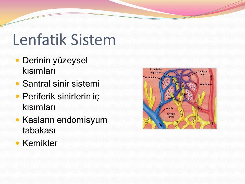 Lenfatik Sistem Derinin yüzeysel kısımları Santral sinir sistemi