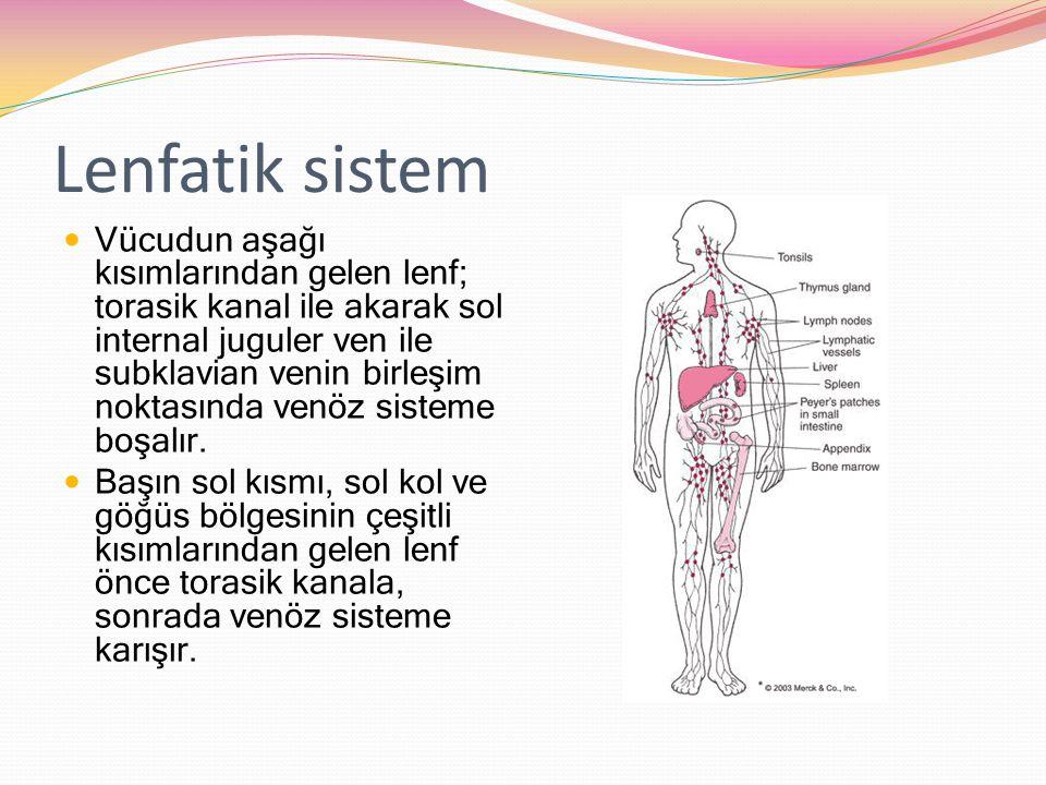 Lenfatik sistem