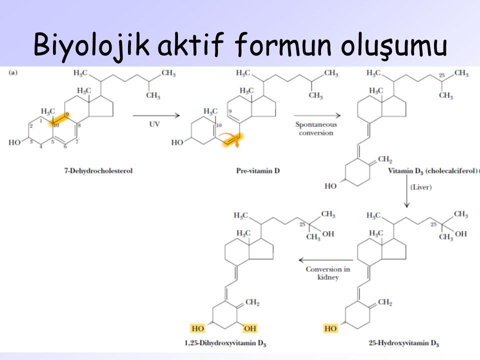 Biyolojik aktif formun oluşumu
