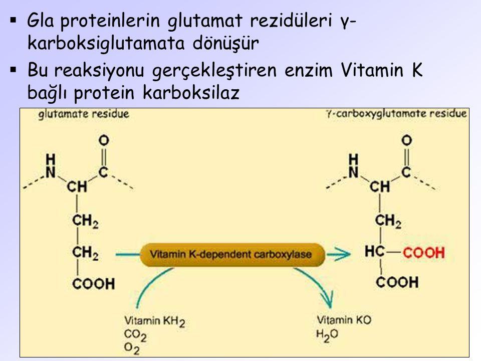 Gla proteinlerin glutamat rezidüleri γ-karboksiglutamata dönüşür