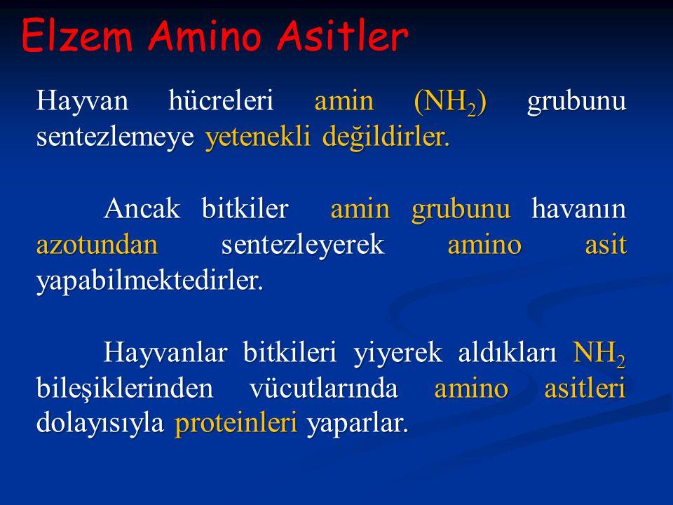 Elzem Amino Asitler Hayvan hücreleri amin (NH2) grubunu sentezlemeye yetenekli değildirler.