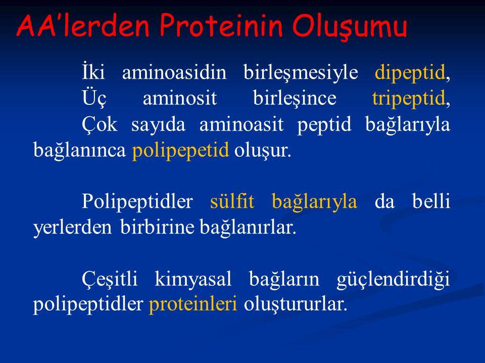 AA'lerden Proteinin Oluşumu