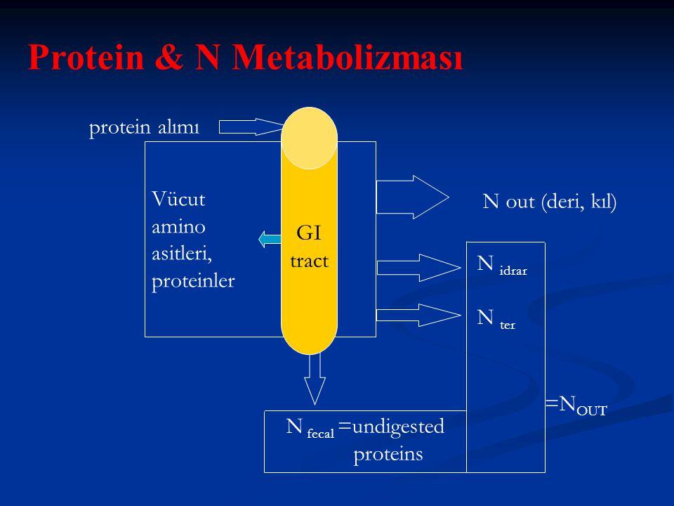 Protein & N Metabolizması