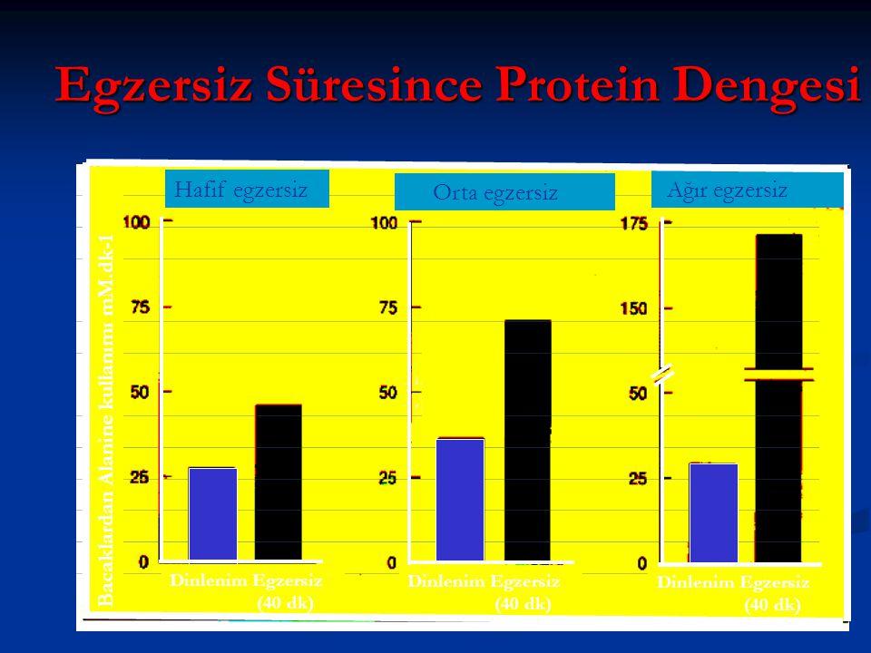 Egzersiz Süresince Protein Dengesi