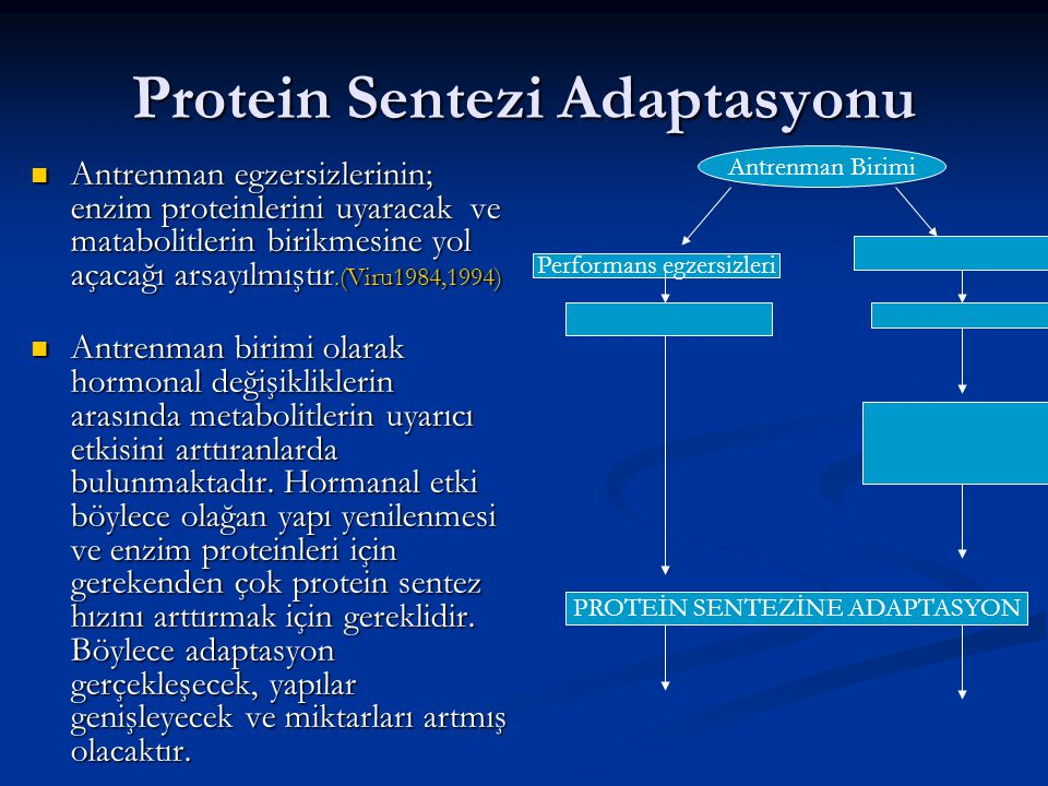 Protein Sentezi Adaptasyonu