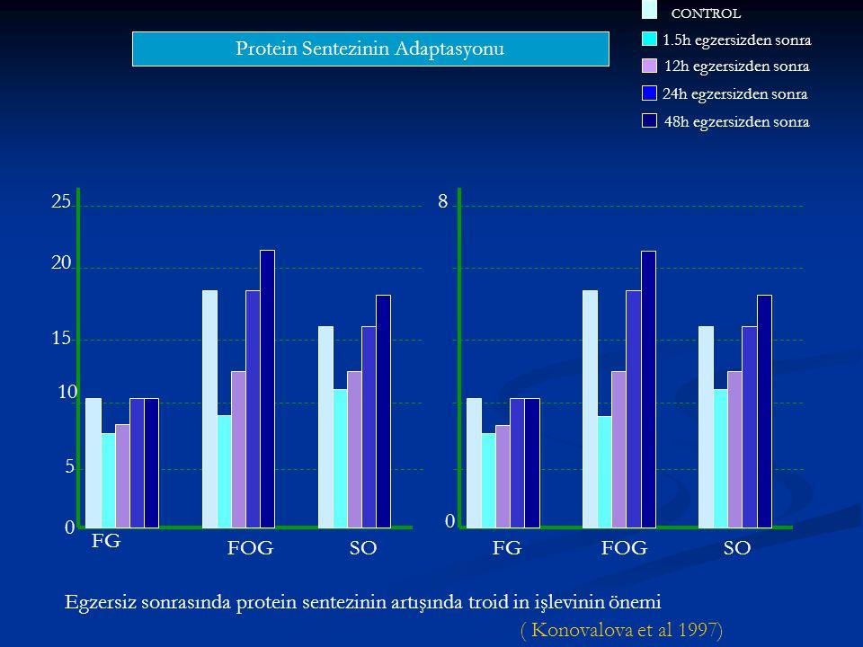 Protein Sentezinin Adaptasyonu