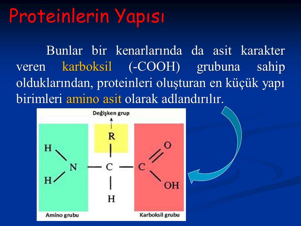 Proteinlerin Yapısı