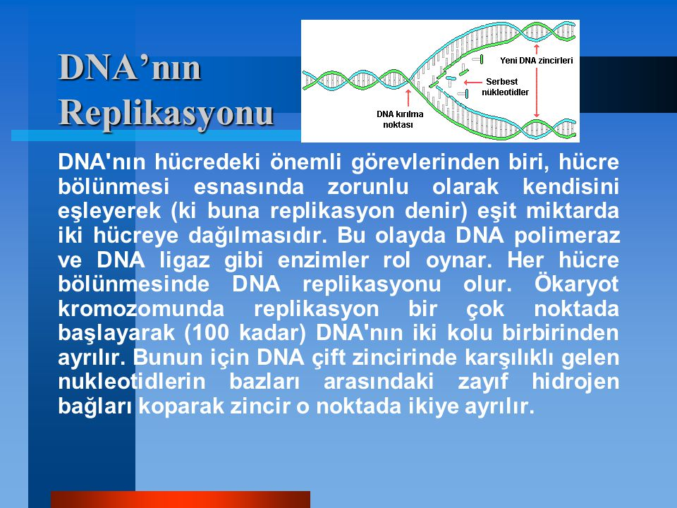 DNA'nın Replikasyonu