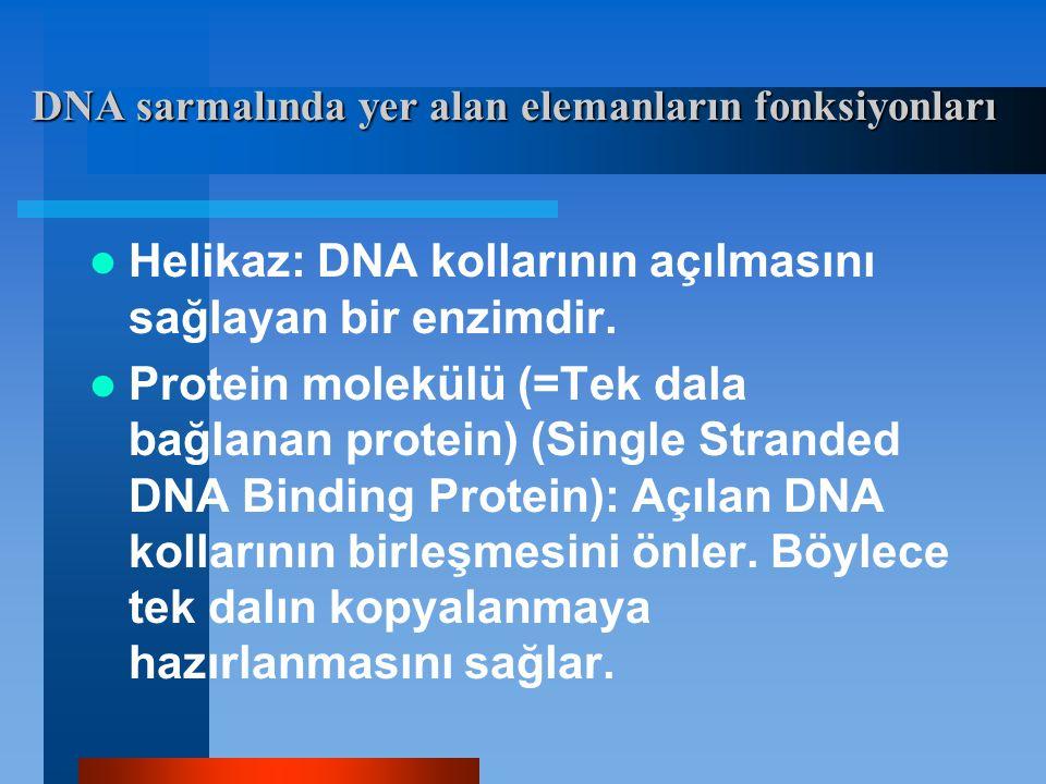 DNA sarmalında yer alan elemanların fonksiyonları