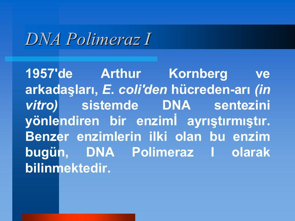 DNA Polimeraz I
