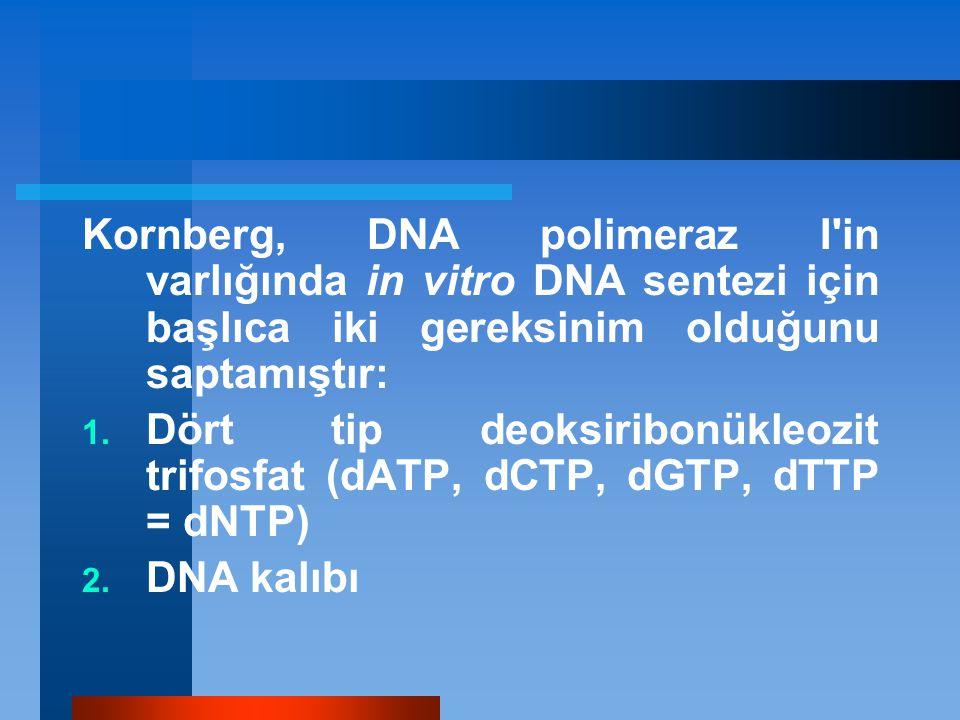 Kornberg, DNA polimeraz I in varlığında in vitro DNA sentezi için başlıca iki gereksinim olduğunu saptamıştır: