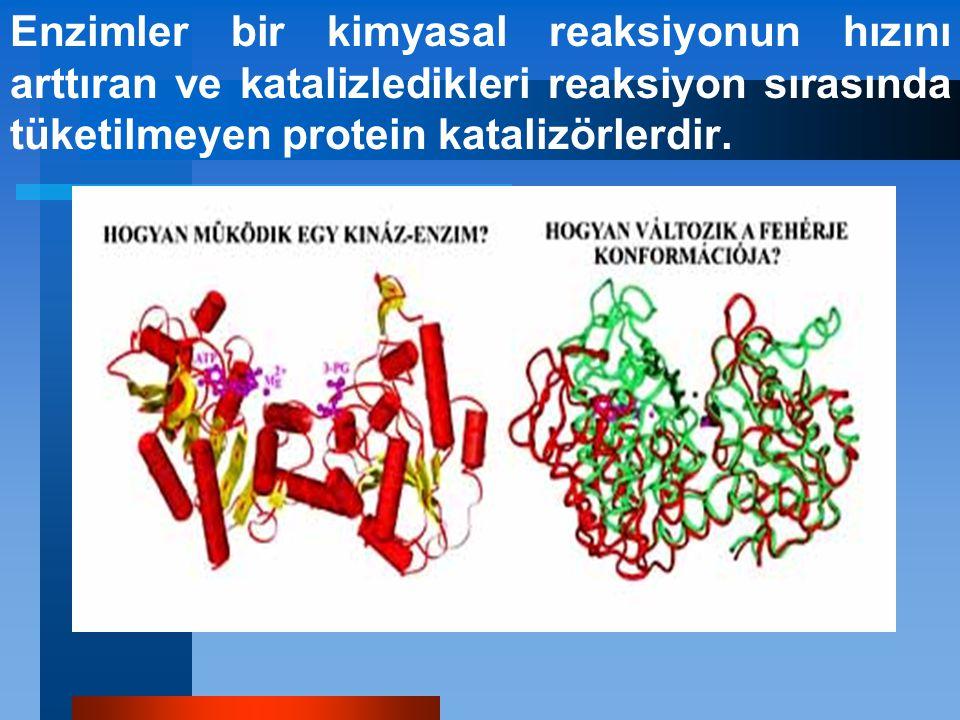 Enzimler bir kimyasal reaksiyonun hızını arttıran ve katalizledikleri reaksiyon sırasında tüketilmeyen protein katalizörlerdir.