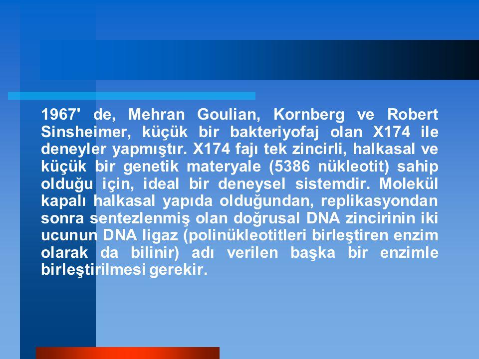 1967 de, Mehran Goulian, Kornberg ve Robert Sinsheimer, küçük bir bakteriyofaj olan X174 ile deneyler yapmıştır.
