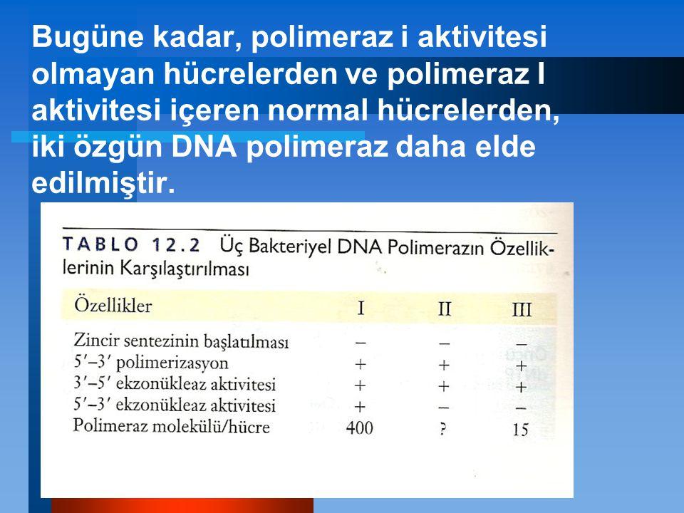 Bugüne kadar, polimeraz i aktivitesi olmayan hücrelerden ve polimeraz I aktivitesi içeren normal hücrelerden, iki özgün DNA polimeraz daha elde edilmiştir.